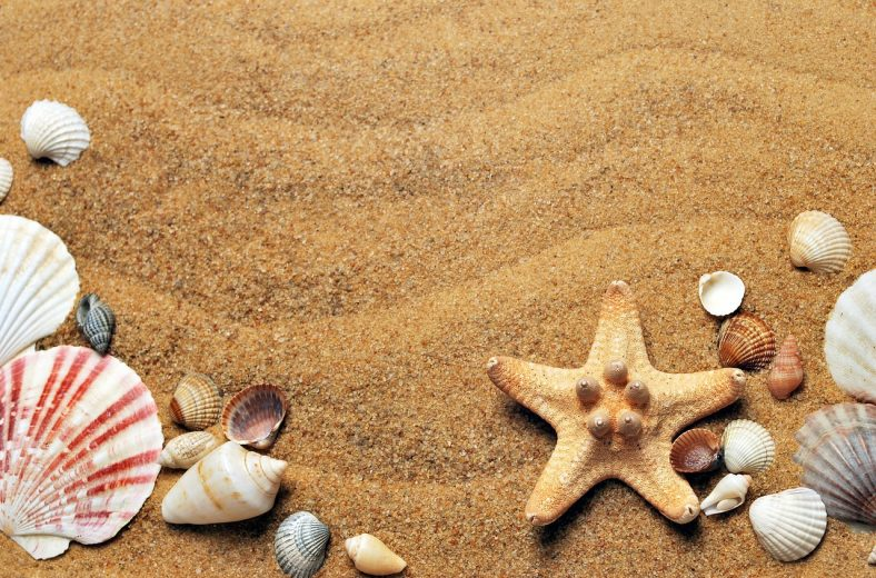 A sandy beach with shells on it